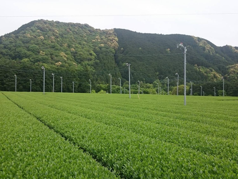 畑中製茶-1