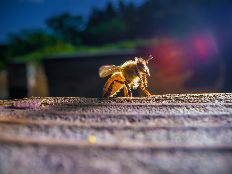 舘養蜂-イメージ
